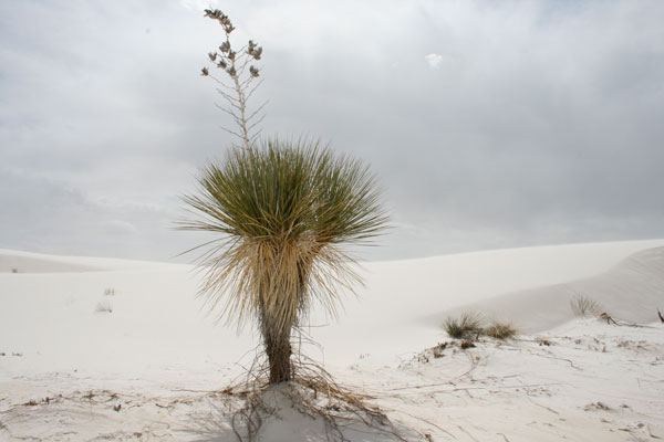 Quizagogo - Famous Landmarks in USA - White Sands National Monument