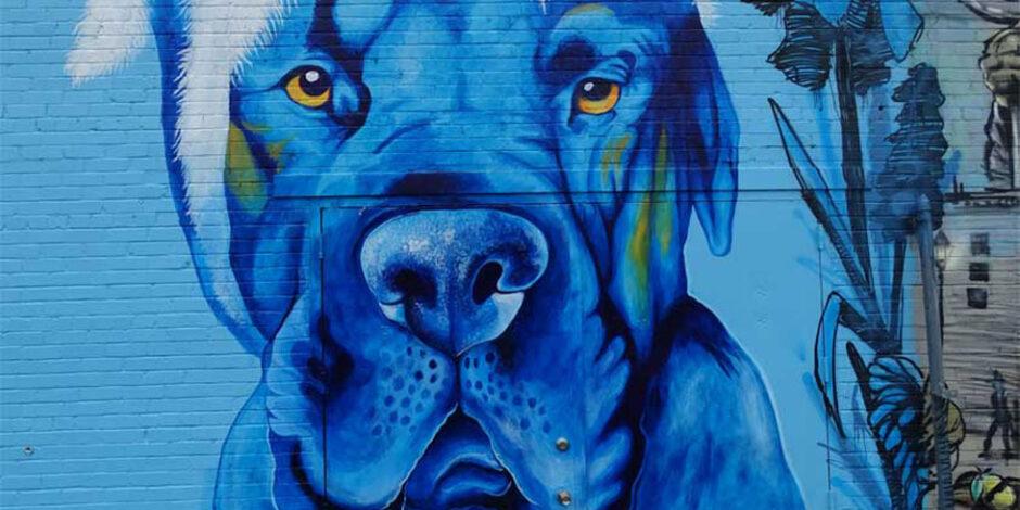Linus in Blue by Monica Diaz